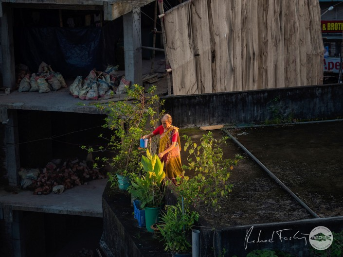 Old lady watering her plants on a roof terrace in Chittagong, Bangladesh