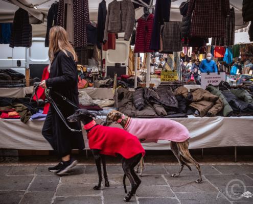 Ping Dogs, Street Art, Reinhard Fasching